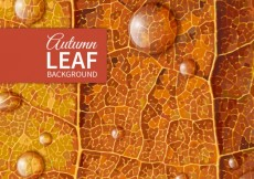 Free vector Autumn leaf background #1643