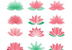 Free vector Lotus flowers collection #1475