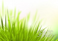 Free vector Realistic grass #1311