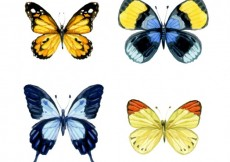 Free vector Watercolor butterflies #2231