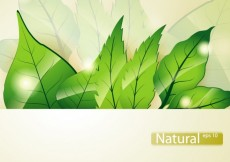 Free vector Background with green leaves #10113