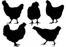 Free vector Free Chicken Silhouette Vector #12038