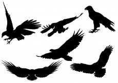 Free vector Free Eagle Silhouette Vector #7760