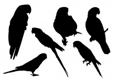 Free vector Free Parrot Silhouette Vector #4206
