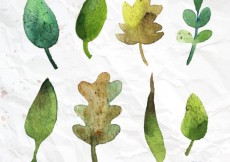 Free vector Hand painted leaves #4883