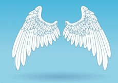 Free vector Isolated wings #7927