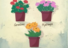 Free vector Traditional flowerpots #4625