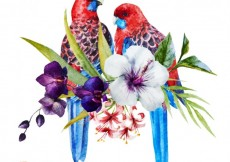 Free vector Watercolor parrots and flowers #9472