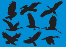 Free vector Wildfowl And Big Bird Silhouette Vectors #10945