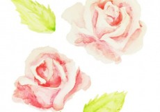 Free vector Hand painted roses #19566