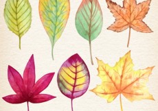 Free vector Watercolor autumnal leaves #12638