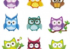 Free vector Colorful owls collection #26307