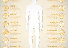 Free vector Man silhouette and human organ icons #20738