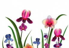 Free vector Realistic orchids  #22346