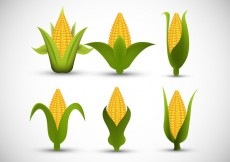 Free vector Ear of corn #25199