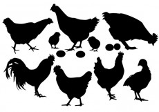 Free vector Chicken silhouette vector #28600