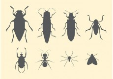 Free vector Free Vector Set of Insects #32397