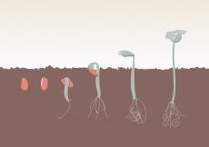 Free vector Plant Growth Evolution Free Vector #30760