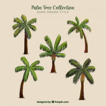 Free vector Types of hand drawn palm trees set #2181