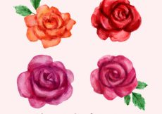 Free vector Four pretty watercolor roses #3778