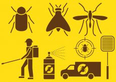 Free vector Pest Control Icons #6795
