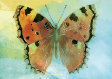 Free vector Watercolor Butterfly Background #12062