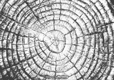 Free vector Free Tree Rings Vector Texture #17273