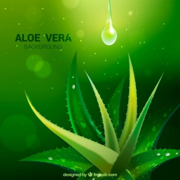 Free vector Green background with aloe vera and drops #16386