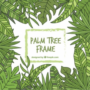 Free vector Hand drawn palm leaves frame #13187
