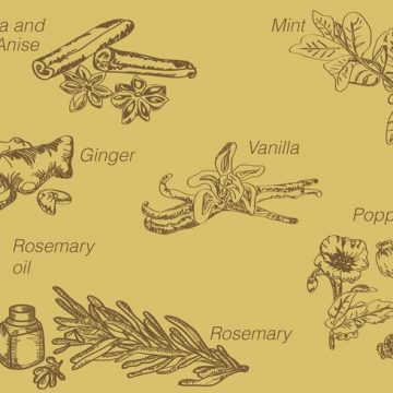 Free vector Hand Drawn Spices #20352
