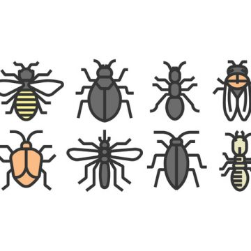 Free vector Vector Insect Icons #21445