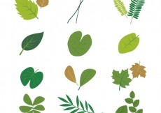 Free vector Collection of leaves #1971