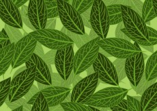 Free vector Green leaves background #1799