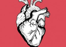 Free vector Hand drawn human heart #50