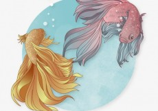 Free vector Siamese fighting fishes #287