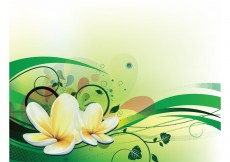 Free vector Vector illustration with plumeria #3939