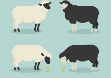 Free vector Sheeps in love #7416