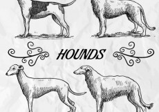 Free vector Sketchy hounds #5024