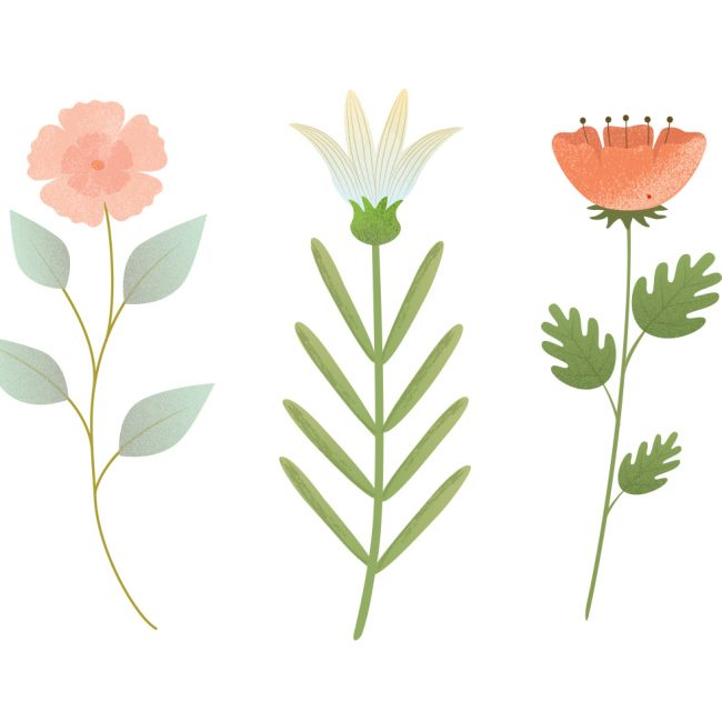 Free vector Vector Flower Illustration #4708