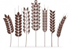 Free vector Wheat ears collection #7393