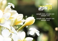 Free vector White flowers with blurred background #4982