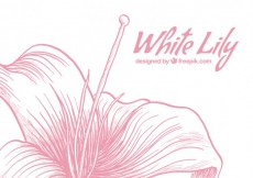 Free vector White lily #4654
