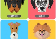 Free vector Breeds of dogs #12949
