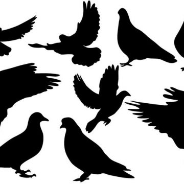 Free vector Free Pigeon Silhouette Vector #18988