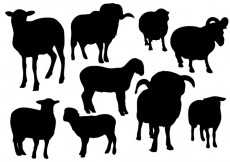 Free vector Free Sheep Silhouette Vector #14394