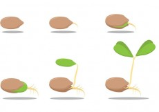 Free vector Growing Seed Vectors #17058