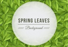 Free vector Spring leaves background #13576