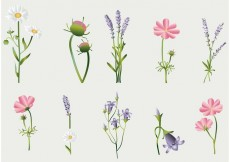 Free vector Flower Vectors Collection #27128
