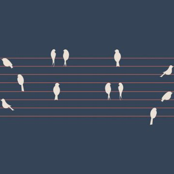 Free vector Free Birds on a Wire Vector Illustration #25296