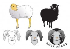 Free vector Sheep Isolated Vectors #24007